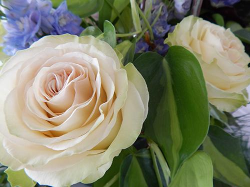 upsy daisy floral 4 20190613 1505173333